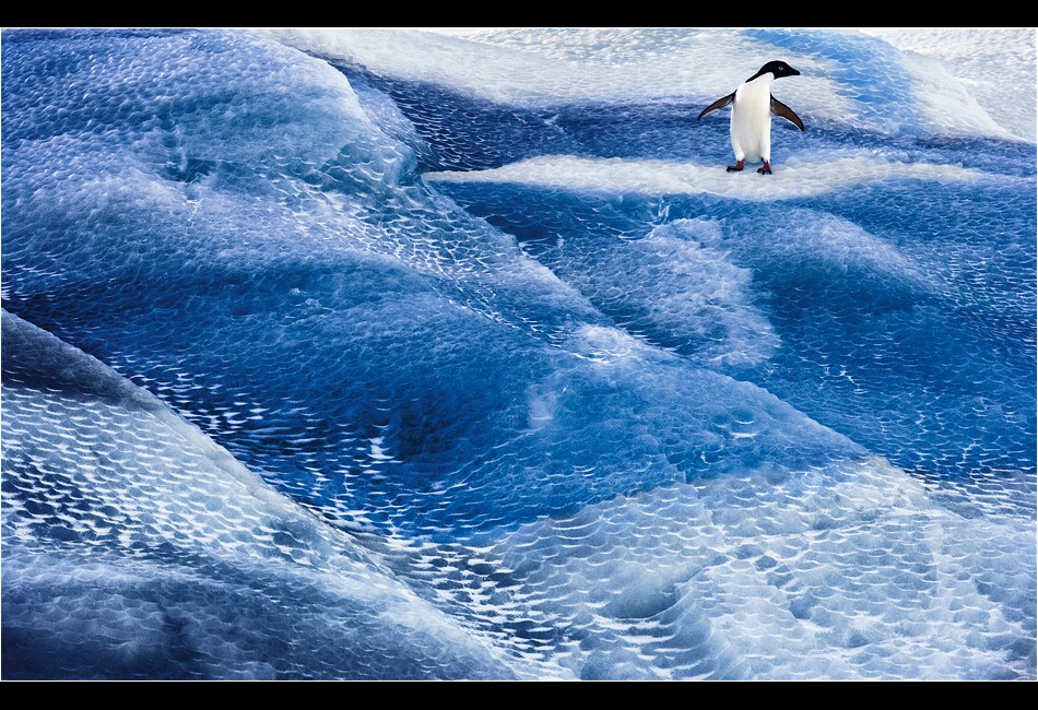 Adélie Penguin on Striped Iceberg