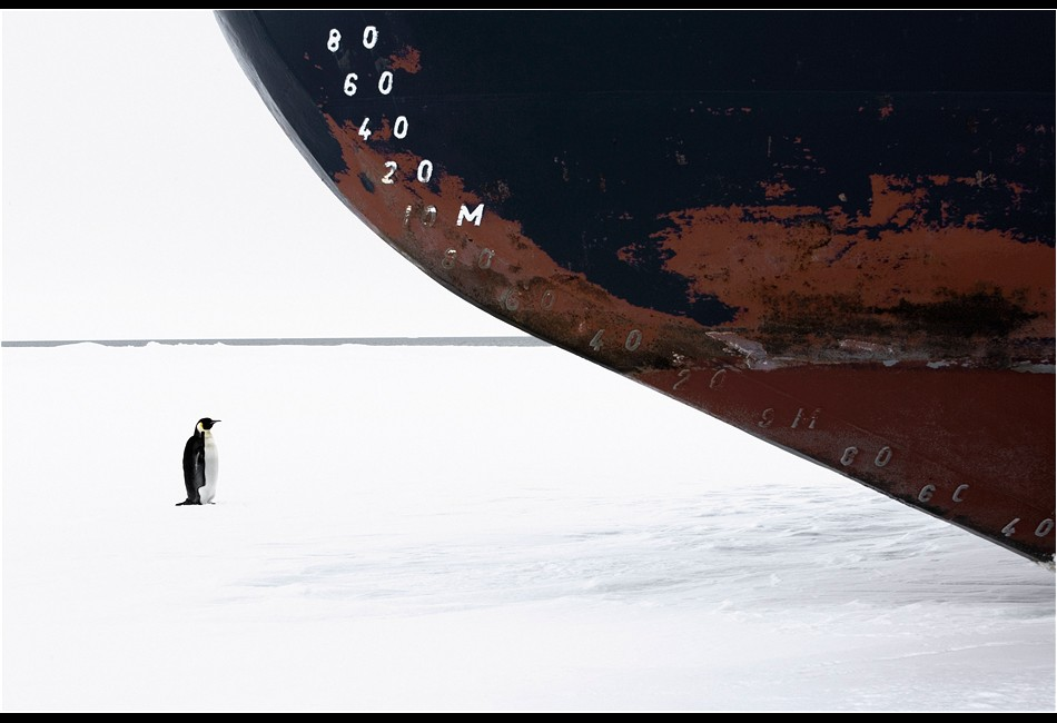 Emperor Penguin and Ice Breaker